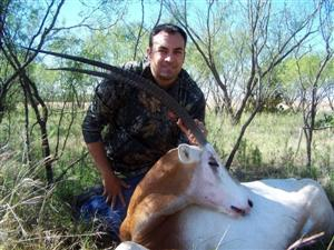 Oryx hunting pictures